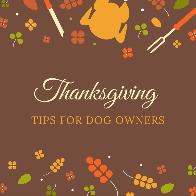 Thanksgiving tips for dog owners