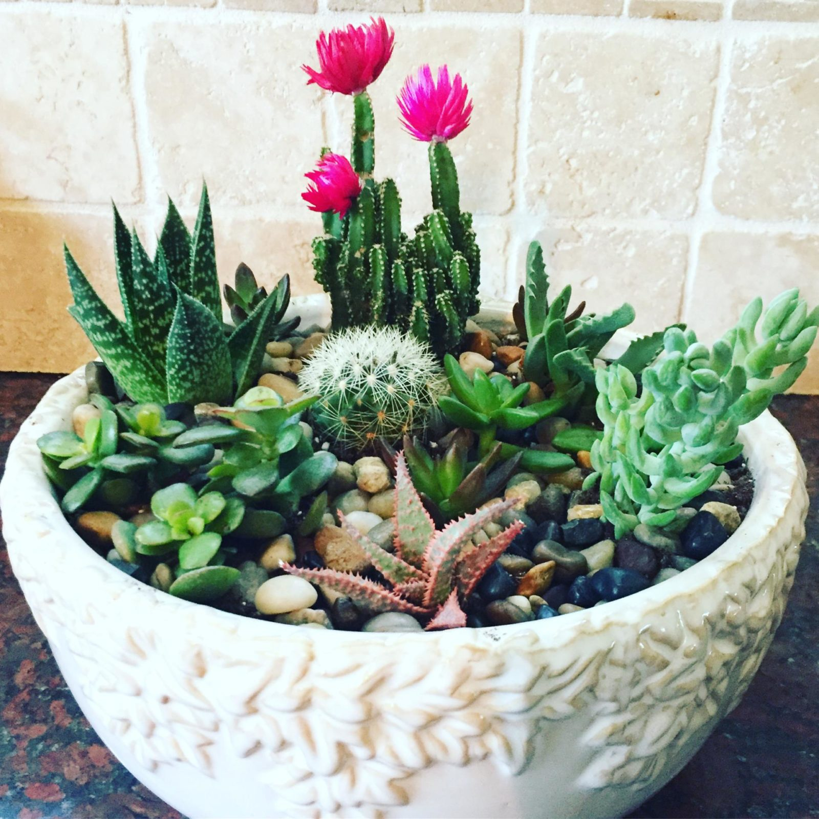 Wondering how you can make your own succulent garden? It's so easy! Check out my DIY tutorial.