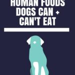 Wondering what foods are safe or unsafe for your dog(s) to eat? Read this list!
