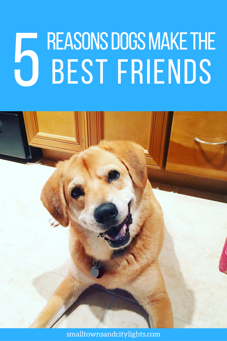 Read these 5 reasons dogs make the best friends!